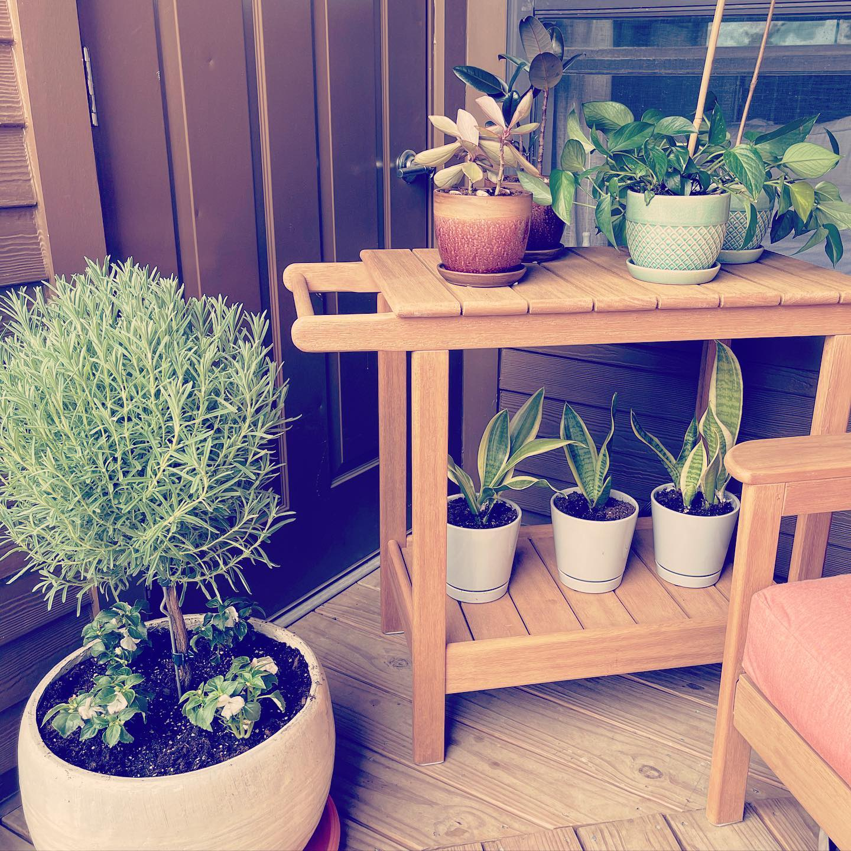 New Plants, New Season, all Green